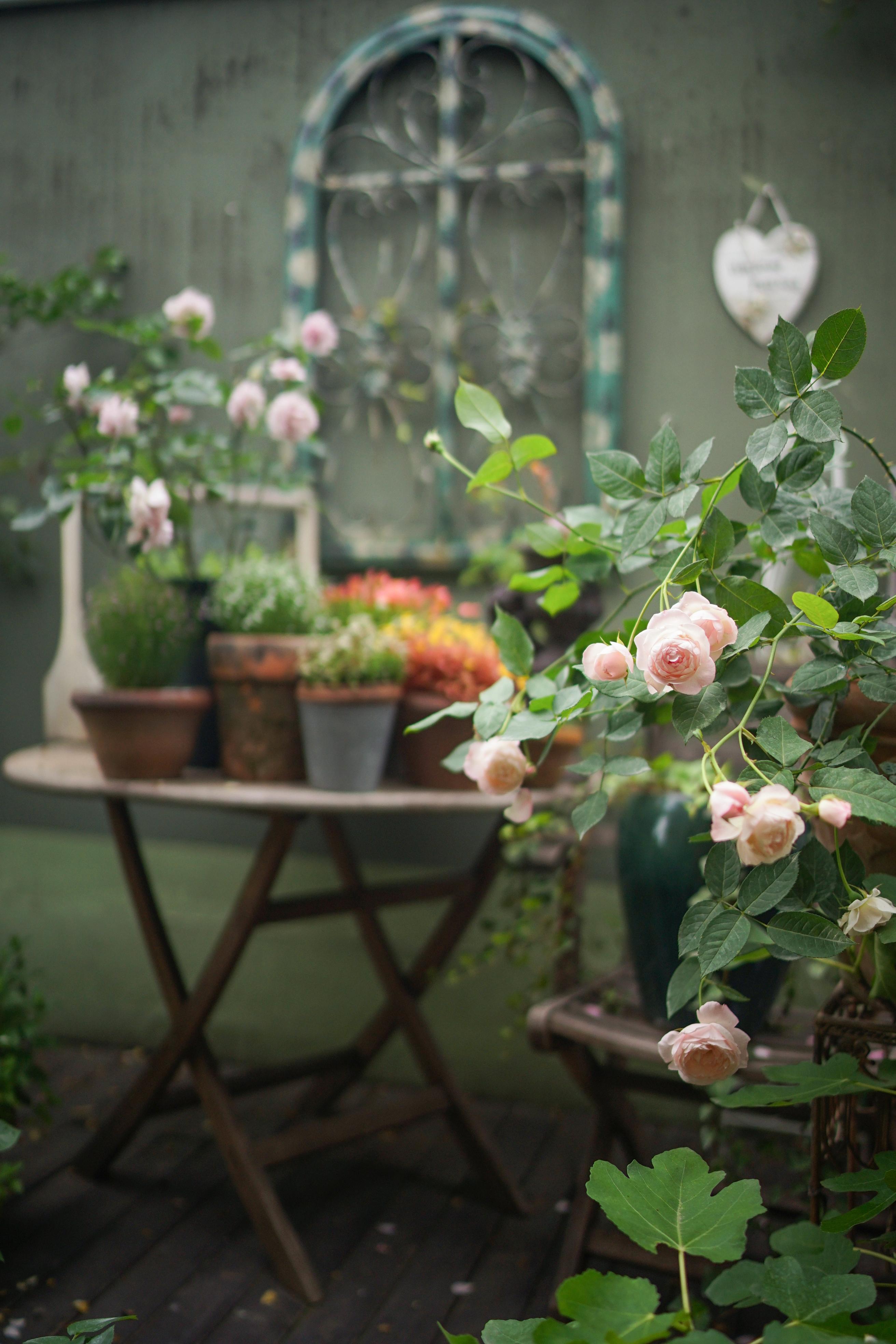 在光影之间的老房子里,盖一座秘密花园