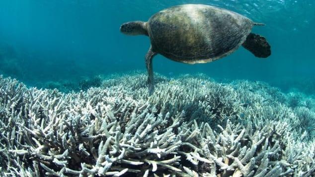 http_%2F%2Fcdn.cnn.com%2Fcnnnext%2Fdam%2Fassets%2F180821112635-great-barrier-reef-bleaching.jpg