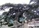 http://fo.ifeng.com/chaosheng/chaoshengwanxiang/detail_2012_07/19/16136291_0.shtml