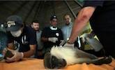 世界最惨动物园关闭