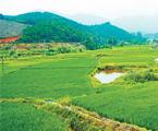 项目区内路通渠连,农作物旱涝保收,预计年增加农业产值279万元