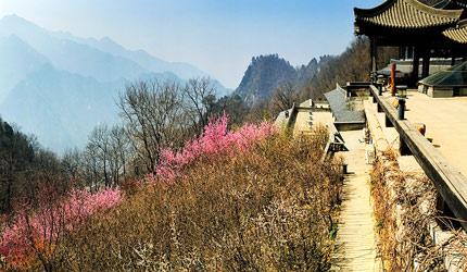 中国佛教八大宗派祖庭 六个在西安