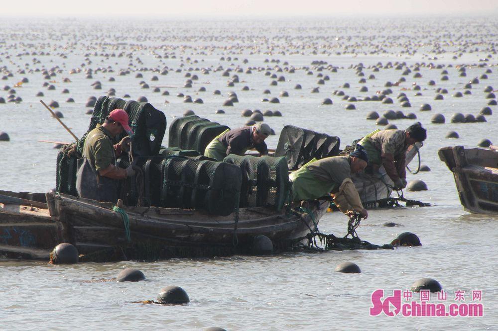 威海荣成:立夏时节海上忙