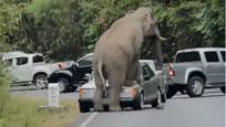 大象受游客惊吓 冲上前疯狂踩踏汽车