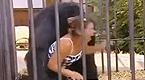 大猩猩骚扰女游客 让人哭笑不得