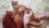污!房间门一开就看到两只在亲亲的猫!