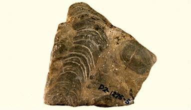 37亿年前沉积物  - 点击图片进入下一页