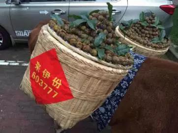 新锦江娱乐场官网