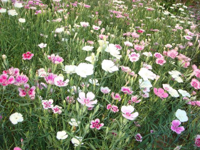 星座花语大全带图片和花名 12星座代表的花花姑娘 - 点击图片进入下一页