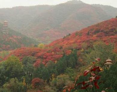 雨后济南南山红似火,红叶水灵不同往