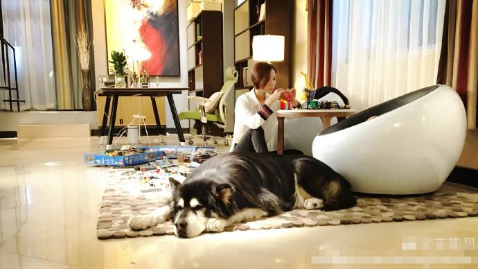 有狗有家有生活 王珞丹理想中的生活是这样的