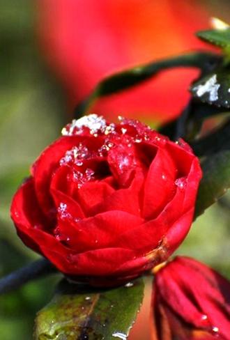 诗歌青岛|诗与花:坐在这个城市能听见花开的声音