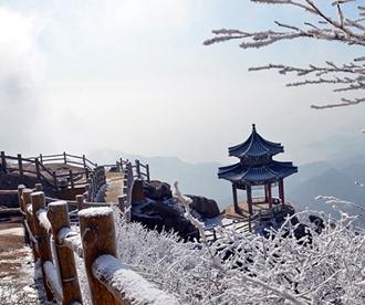 雪后崂山之巅再现绝美雾凇 置身雪国圣境恍如隔世