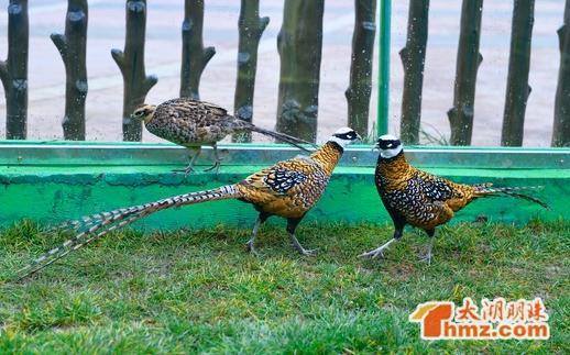年初一至年初五在动物园鳄鱼雕塑广场