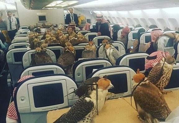 网友曝照:沙特王子带80只鹰坐飞机