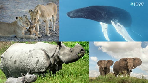 世界野生动植物日:聆听年轻的声音 - 梅思特 - 你拥有很多,而我,只有你。。。