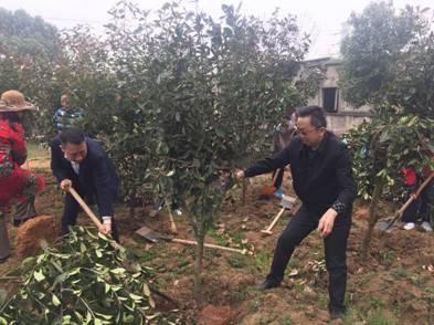 建设生态化城市:武汉今迎春季义务植树最高峰