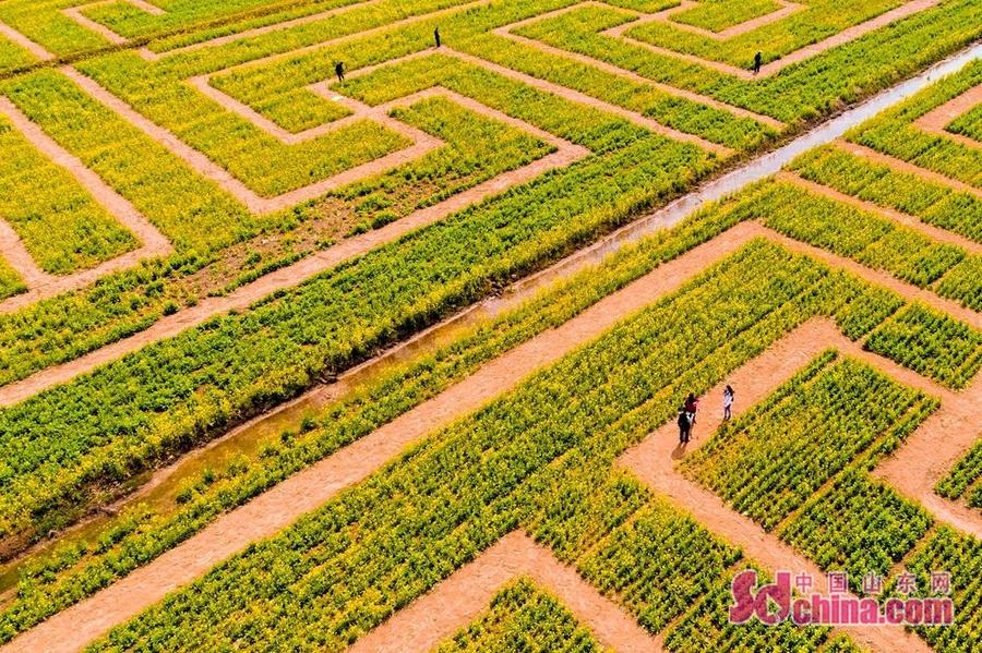 山东兰陵县乡镇地图距离