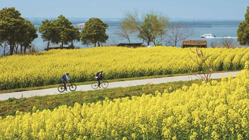 莲花岛,总面积3平方公里的一座小岛,油菜花种植面积达1000亩,是苏州