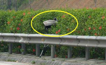 路上这5种摄像头都不认识 3本驾驶证都不够扣