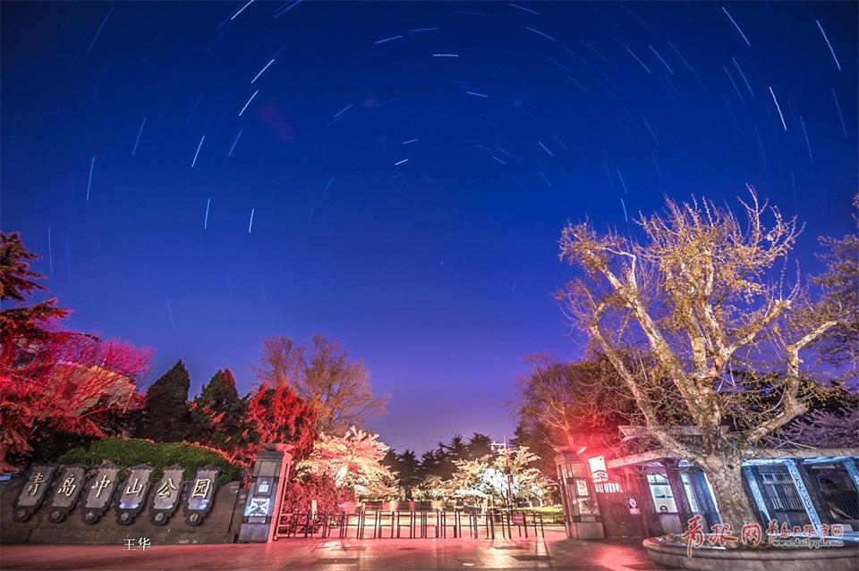 如梦似幻!实拍青岛中山公园星轨下的晨樱