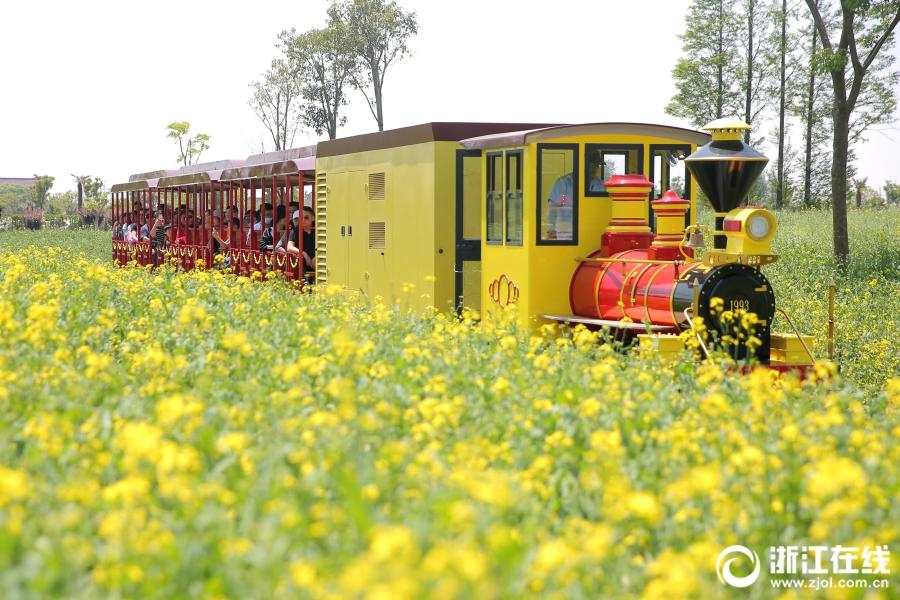 嘉善:小火车上游花海