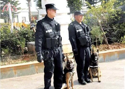 警犬人群中认出逃犯 将其扑倒捕获