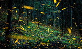 奇幻美景 墨西哥现真实版萤火虫森林