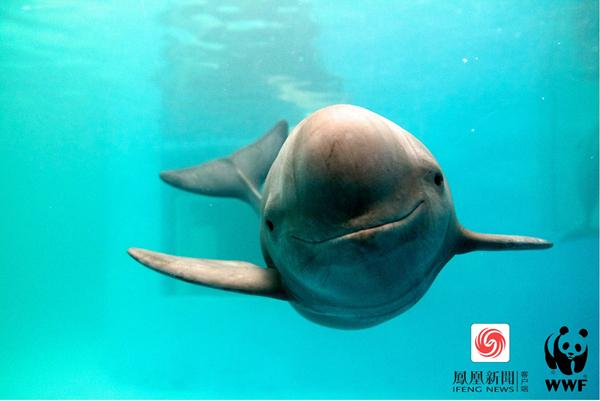 专家称疑似现身的白鱀豚应是江豚 江豚保护也刻不容缓 - 梅思特 - 你拥有很多,而我,只有你。。。