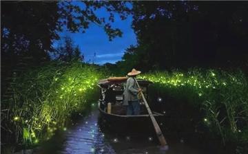 """杭州周边这些地方 仲夏藏着""""会发光的小精灵"""""""