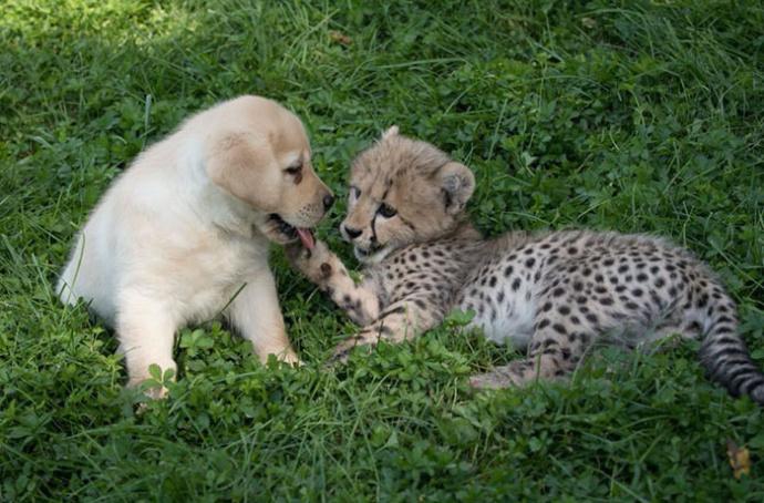 非洲可爱小宝宝图片