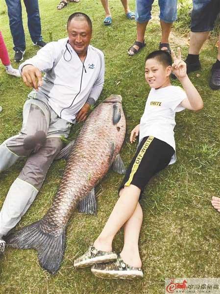 云龙湖又出大鱼 重60公斤 体长1.5米