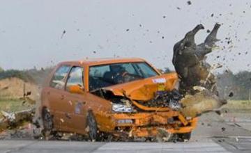 小车行驶时突然出现野猪群,司机撞上去后却没事