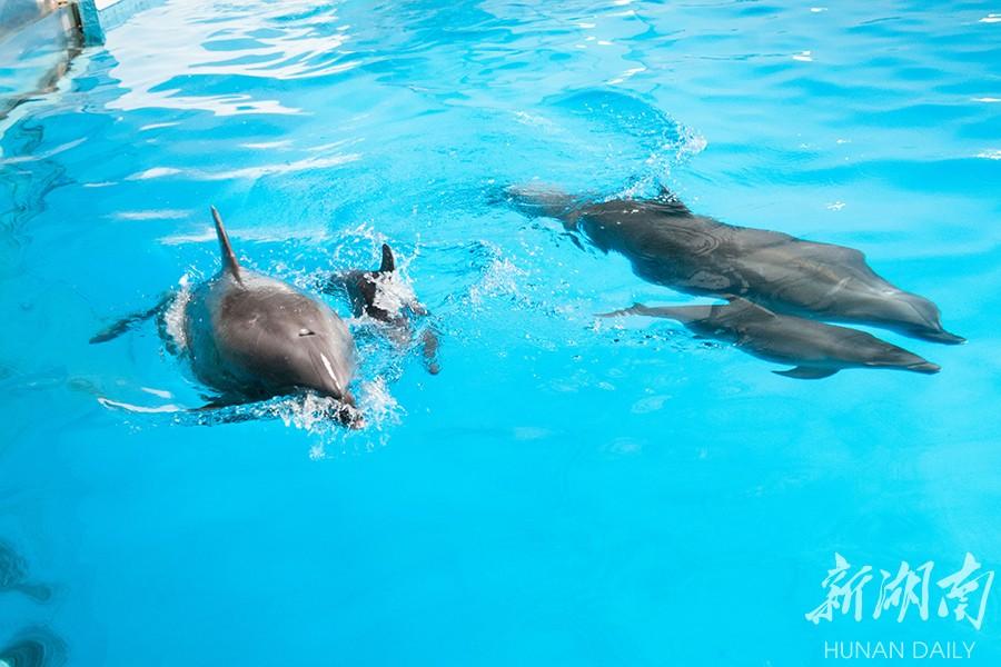 长沙海底世界再添小海豚