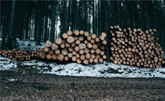 久盛地板,栎木进口,实木家居