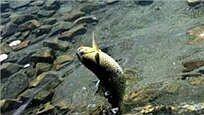 为何没人敢在西藏的湖里钓鱼?真相惊人
