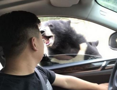 你怎么看游客八达岭野生动物园被咬伤事件?