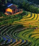 遂川县:这里不仅有全球最美梯田,还有……