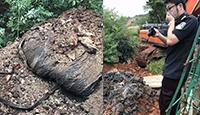浙江偷埋病死猪:2013年所埋 已挖出223.5吨