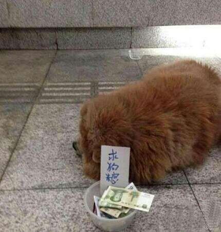 fun来了:为了赚回份子钱 单身狗给自己办30大寿图片