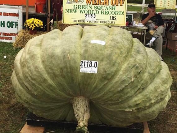 三破纪录!美国农民种出近1吨重南瓜
