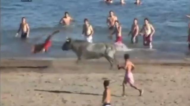 野牛海滩疯狂攻击人 现场混乱
