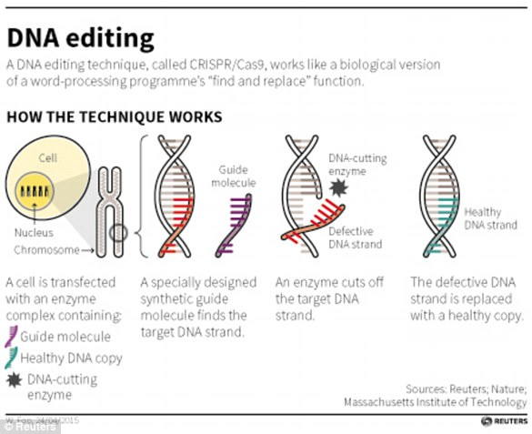 麻省哈佛开发基因编辑技术 有望治愈逾1.5万种遗传病