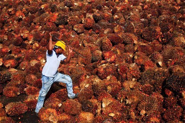 印度豆油、棕榈油期货大涨 印度食用油进口税翻