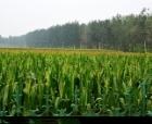 商丘市农业部门多管齐下全力做好秋作物管理