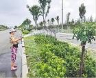 商丘市園林綠化中心 全力抗旱保護綠化成果