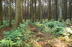 陕西省国家储备林建设战略合作协议签订