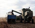 """商丘市""""三秋""""生產卓有成效 機收機玉米466萬畝機收花生69萬畝"""