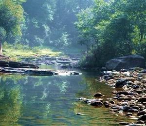 大康养助力脱贫 石柱森林业产值超21.5亿