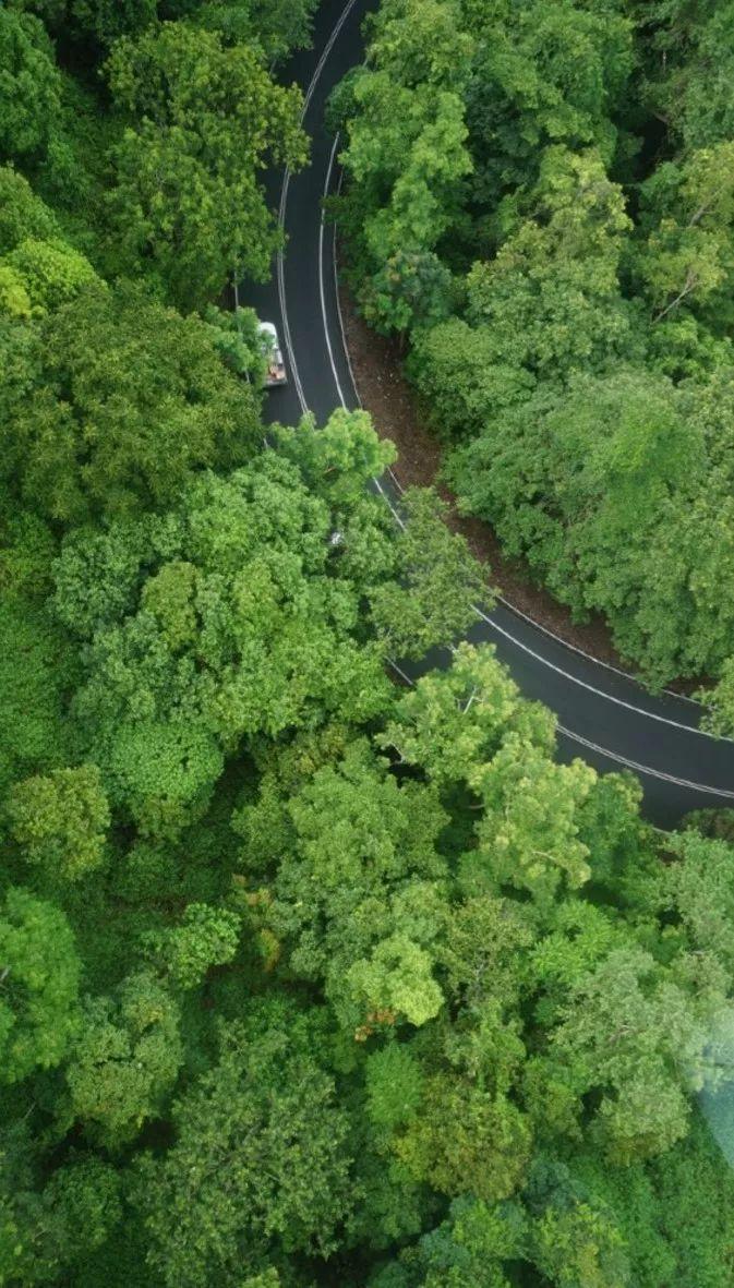 雨季的澳大利亚昆士兰丛林里究竟藏了什么奇妙物语?